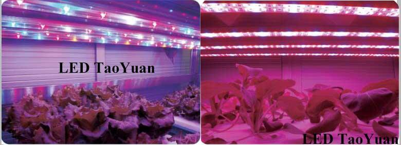 LED Grow Light -3 - Click Image to Close